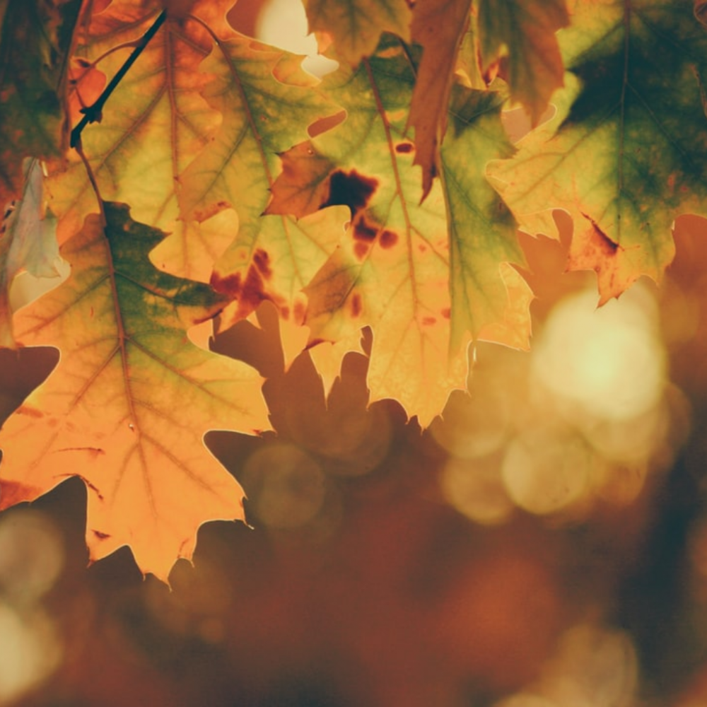 10 Things to Look Forward to This Fall
