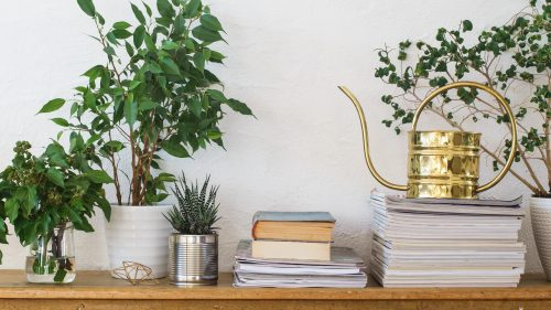 Brighten Your Home This Fall with Our Indoor Plant Guide